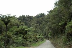 Travel the Forgotten World Highway - NZ