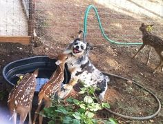 Dog who is very happy to be making baby deer friends. | 35 Dogs That Will Make Your Day Instantly Better