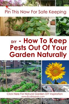 How To Keep Pests Out Of Your Garden Naturally With Worm Composting