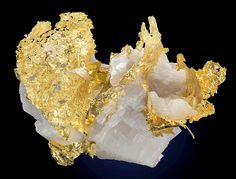 Leaves of Native Gold in white Calcite // Bronzewing Mine (Mount McClure Mine), Yandal Station, Leonora Shire, W. Australia, Australia
