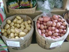Potatoes at Urban Oaks Organic Farm in New Britain Connecticut. Community Supported Agriculture (CSA). Open year-round. Fri 2:00 to 6:00 & Sat 10:00 to 1:00. 225 Oak Street in New Britain, CT 06051  urbanoaksorganicfarm@gmail.com , 860.223.6200 , Blog http://www.blog.urbanoaks.org/ , Facebook https://www.facebook.com/UrbanOaksOrganicFarm , Pinterest http://pinterest.com/KimberlyBurnham/urban-oaks-organic-farm-in-new-britain-connecticut/ Google Plus