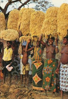 "Africa | ""Rice harvest"".  Niofila near Douna, Burkina Faso || Scanned postcard; publisher DiaVolta.  No. 78/539"