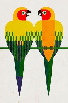Scott Partridge - Illustration - Sun Parakeet