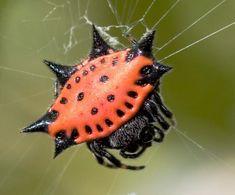 Spiders - Eco Friends Pest ControlEco Friends Pest Control