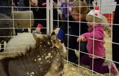 10 Activities Kids Will Love at the National Western Stock Show
