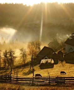 Dream thing I : Have my own farm farmhouse, barn - live with family, animals and nature.