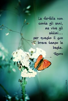 Tagore - La farfalla non conta gli anni__The butterfly doesn't pay attention to her age. She lives her short time, and that is why her short life is enough for her. Cogito Ergo Sum, Italian Quotes, Feelings Words, Quotes About Everything, Italian Language, My Mood, Decir No, Quotations, Life Quotes