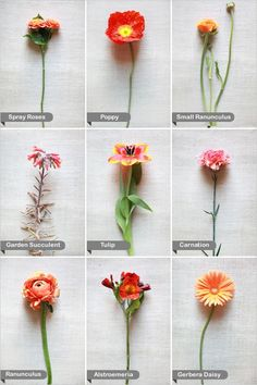 Orange Wedding Flower Guide for all of your wedding floral arrangements and bouquets. Wedding Flower Guide, Orange Wedding Flowers, Orange Flowers, Colorful Flowers, Flower Colors, Wedding Ideas, Purple Wedding, Wedding Photos, Bunch Of Flowers