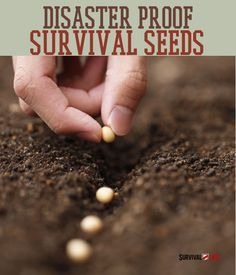 Survival Plans - Survival and Prepper Tips Survival Gadgets, Survival Supplies, Survival Life, Survival Food, Wilderness Survival, Survival Prepping, Survival Skills, Emergency Preparedness, Emergency Food