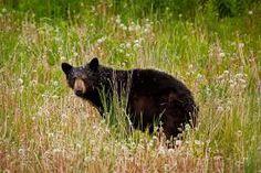 """Résultat de recherche d'images pour """"voir ours en peluche polonais"""""""
