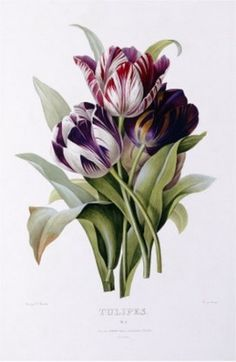 Big Canvas Co. Pierre Joseph Redoute 'Tulips' Stretched Canvas Art by Big Canvas…