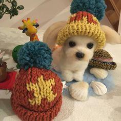 ペット 帽子