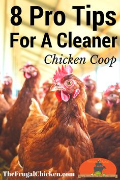 Cleaning your chicken coop is boring, but it's one of the best investments in your hen's health that you can make. Get 8 pro tips to get it done better and faster!
