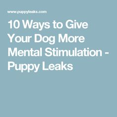 10 Ways to Give Your Dog More Mental Stimulation - Puppy Leaks