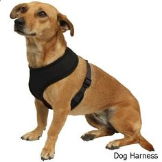 Dog Harness - OxGord Dog Collar Harness Cat Pet Safe Control Easy Soft Walking no Pull Tug free - Service Vehicle Seatbelt Safety Strap Vest Leash for small to large dogs - Airline Airport approved