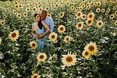 KAREN E DANILO Ensaio de casal em Holambra Outdoor, Field Of Sunflowers, Photoshoot, Wedding Photography, Beautiful Landscapes, Married Couple Photos, Field Of Flowers, Outdoors, Outdoor Games