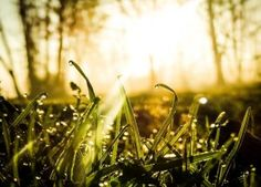 Dreamy Morning by Nova-Mite on DeviantArt Morning Light, Artsy Fartsy, Find Image, We Heart It, Grass, Dandelion, Spirituality, Deviantart, Nature