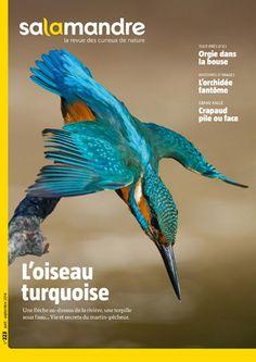 La Salamandre. N°  223 - Août-Septembre 2014 - L'oiseau turquoise.