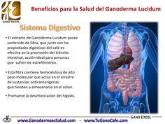 Beneficios del Ganoderma Lucidum en la Salud Ayurveda, Health, Gold, Medicine, Health Infographics, I Love Coffee, Health And Nutrition, Health And Beauty, Health And Wellness