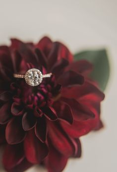 This halo engagement ring is such a stunner, and the way he proposed was a dream come true! #halorings