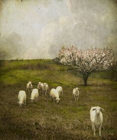 """Yesterday It Rained"" by Jamie Heiden"
