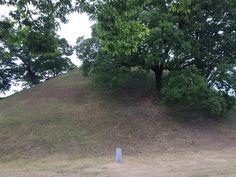 누군가의 묘지인가?  아니면  누군가의 나무인가?  혹  누군가의 언덕일까?  그럼  누군가의 자연인 걸까?  처음엔 묘지였겠지만 시간은 묘지를 자연으로 바꾸고 말았다.  #봉황대 #경주 #노동노서고분군