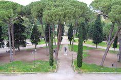 https://flic.kr/p/K8EoYk | Italian Stone Pine - Landscape, Rome Italy
