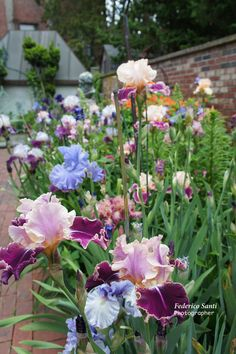 View of the Iris bed.