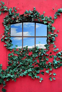 Love the contrast between the green ivy and the red paint