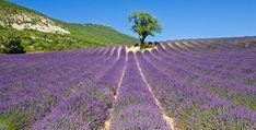 Tourisme dans la Drôme, du Vercors à la Provence : idées week-end et séjours pour vos vacances en Rhône Alpes en France