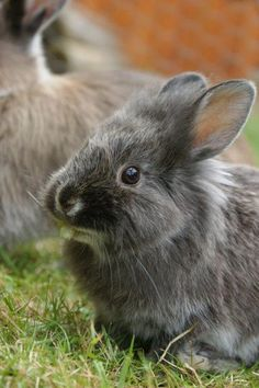 rabbit Photo by Alain Jouenne — National Geographic Your Shot