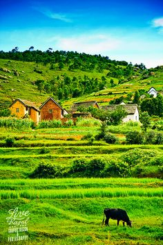 Antananarivo (Madagascar) by LiveRasol