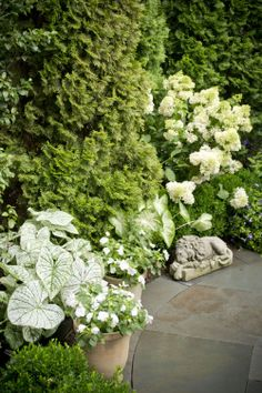 Cottage Farms Sugar Tip Rose Of Sharon Patio Tree M46298 Qvc Gardens Courtyards Patios Gigs Pinterest Trees And Garden