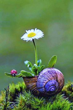 natur fotographie Form small pice flower can grow. Nature Pictures, Beautiful Pictures, Amazing Photography, Nature Photography, Daisy, Birds And The Bees, Flower Wallpaper, Amazing Nature, Belle Photo