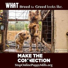 This is what breed for greed looks like.