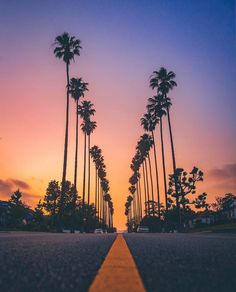 Melrose Avenue by California Palm Trees, California Love, Next Wallpaper, Wallpaper Backgrounds, Wallpapers, Venice Beach, California Wallpaper, Melrose Avenue, Beautiful Places