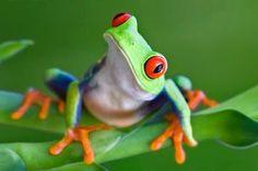 Amphibians May Develop Immunity To Fatal Fungus