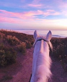 Image about love in ☁️☀️ Radiant Sky ☀️☁️ by Lexi – goals lovely… – Fotografie Cute Horses, Horse Love, Horse Girl, Beautiful Horses, Animals Beautiful, Animals And Pets, Funny Animals, Cute Animals, Arte Equina