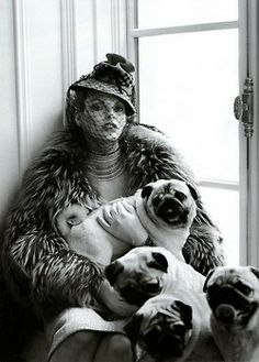 Pugs are so fashionable.