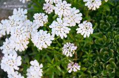 Tatárvirág Garden, Plants, Garten, Lawn And Garden, Gardens, Plant, Gardening, Outdoor, Yard