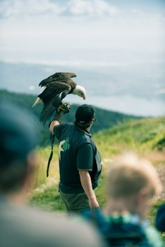 Eagle on the top of Grouse Mountain - part of the Birds in Motion show.