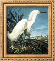 Snowy Heron Giclee Print by John James Audubon at Art.com