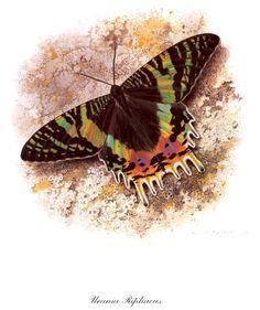 Коллекция картинок: Carl Brenders. Бабочки