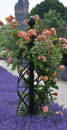 """Garden Trellis Charleston"". Would love this to climb beans etc on in front yard beds."