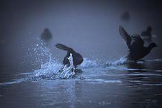 #chase #wildlife #haffreimech #wildlifephotography #remerschen #biodiversum #luxembourg #igerslux #baggerweier #wanderlust #birding #birdwatching #nature #naturelovers #naturephotography #outdoors #ornithology #explore #igerslux #naturephotography #eye_spy_birds #escape #outsideisfree #ic_nature #ignature #ignaturefinest #ig_captures_nature #instanaturelover #allnatureshots #dezpx_birding #wearetheluckyones #dezpx #fog