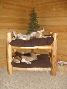 Doggie bunk bed- cute but if I made this for my great dane I would just buy twin sized bunk beds- he could have the top and the other dogs would share the bottom!
