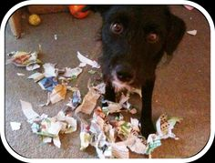 Newspaper is just as much fun as wrapping paper!