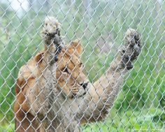 Animal Attractions: Why TripAdvisor Won't Let You Book Tickets To Them Anymore