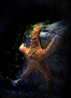 *Starfish