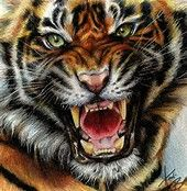 The post Animals Drawings Wallpaper Paintings Animals Tigers Digital Art Drawings appeared first on ThePhotocrafters. Tiger Drawing, Tiger Art, Tiger Tiger, Tiger Wallpaper, Drawing Wallpaper, Art Tigre, Animal Drawings, Art Drawings, Tiger Head Tattoo